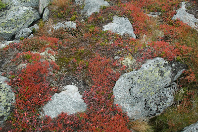 Some of the colorful plants along the way.
