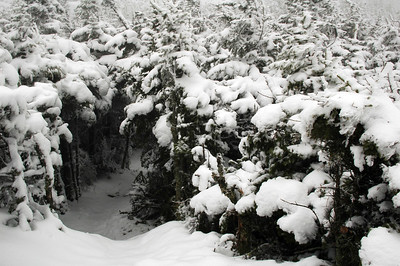 A snowy trail tunnel: Lowes Path at the Quay.