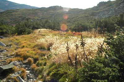 Gulfside Trail along Sam Adams.