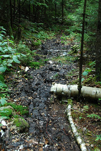 And, some sections of The Link trail are still a little muddy... it was a wet summer.