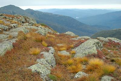 Deer Hair Grass on Mt. Clay.