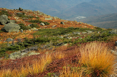 The colorful tapestry of flora along Star Lake Trail heading up Mt. Adams.