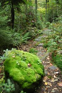 Moss rock on Randolph Path, just below the Pentadoi.