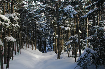 A soft light fliters through the trees onto the soft fresh powder creating a dream like experience on the trail to Crag Camp.