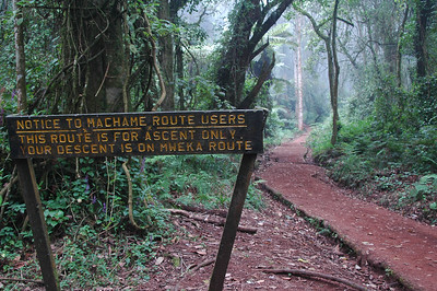 KILIMANJARO: The Machame route is only for going up for a number of reasons including avoiding two way traffic to make it easier for porters and for a more gradual climb to acclimatize. The return trail will be steeper.
