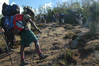 "KILIMANJARO: Nelson, aka ""Mandela"", sets a slow and steady pace. ""PolŽ PolŽ"" is Swahili for 'slow' or 'take it easy'. This was our mantra for the climb. A slow and easy pace is what will help us acclimate for the vast altitude to come."