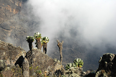 KILIMANJARO: Descending towards Barranco Camp.