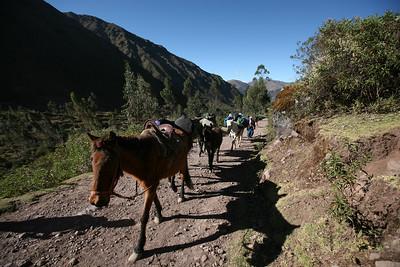 LARES TREK, URUBAMA, CUSCO (Cuzco), PERU: An easy 3 day hike from Lares through Wakawasi, over the Ipsay Jasa Pass (4,450m), Ipsay Cocha Lake, and into Patacancha. Views of Siriwani, Sawasiray & Colque Cruz mountains. David Bailey, Robert Horner, Cameron Martindell; Guide: Guido