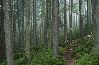There was still a mist lingering in the woods as we started our last day on the trail.