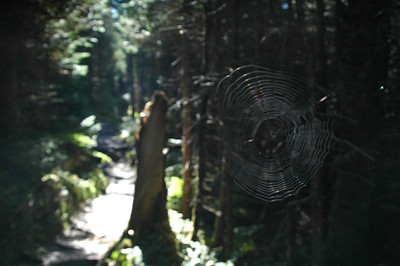 An elaborate web spans across the side trail up to the summit of Old Speck Mountain suggesting few have been up here recently.