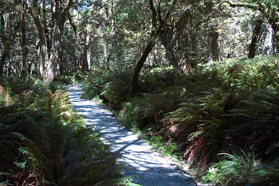 The well groomed trail through a lush forest.