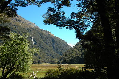 The canopy of trees opens and reveals the open Routeburn Flat to us.