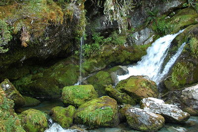 As we get lower on the hillside, flowing water becomes more abundant from the collections of the watersheds above.