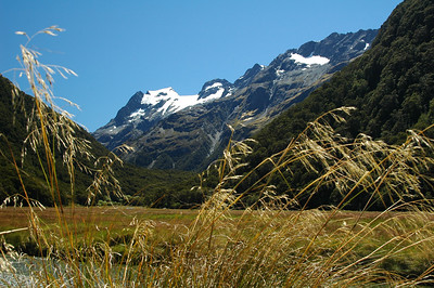 Amber grasses waiving in the gentle breeze at Routeburn Flat