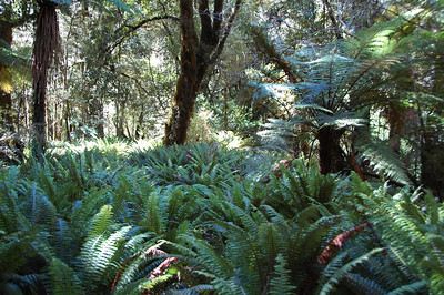 Can you spot the trail? Yeah. Neither can we. Ferns for as far as we can see.