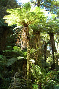 Oh, this might help. Put the ferns on top of trees. Actually, it's all one plant conveniently called a Tree Fern. Clever, eh?