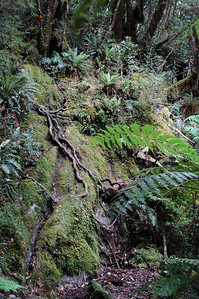 Some of the roots along the trail we had to climb up and climb back down. See the trail marker?