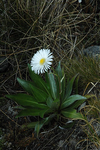 A lone flower survives in this otherwise flowerless landscape.