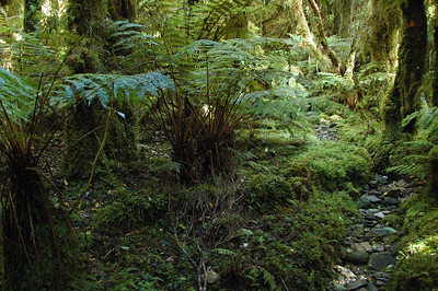 The trail started off being in pretty good shape. The rain forest was thick with ferns and heaps of moss.