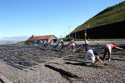 The drying process of the famous Rebun Seaweed. Rishiri-zan is faint in the distance.