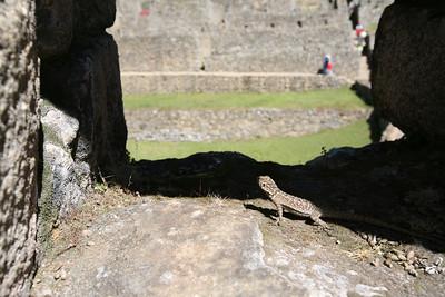 MACHU PICCHU, PERU: Taking the triain into Aquas Calentes (Machupicchu Pueblo), climbing Putucusi, visiting the museum, then climbing Waynapicchu, Huchuypicchu and walking to the Inka Bridge. David Bailey, Robert Horner, Cameron Martindell;