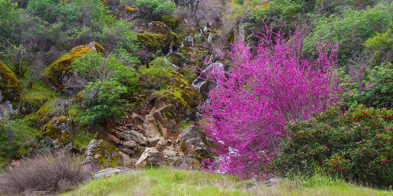 This was our first trip there in March and there was Redbud everywhere from Mariposa to the park entrance.