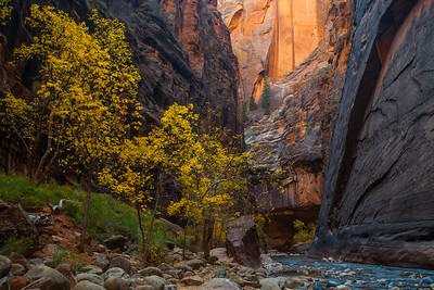 Fall color along the Virgin river in the Narrows section. Zion National Park