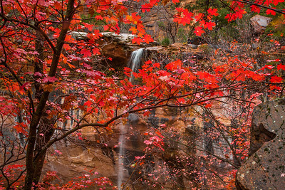 Maple tree & waterfall in Zion Canyon, Zion National Park