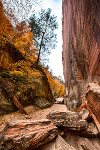 Verticle cliffs in Hidden Canyon with fall colors, Zion, National Park