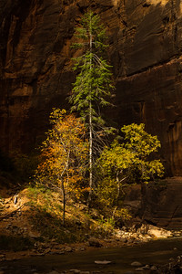 Light & shadows in the Virgin River Narrows. Zion National Park