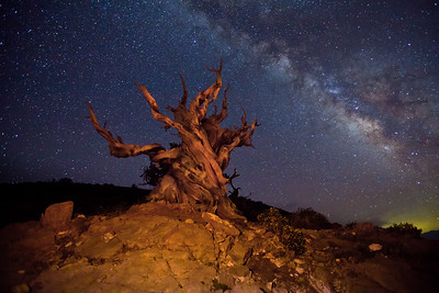 """Bristlecone and the Milkyway"", The Ancient Bristlecone Pine Forest"