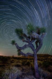 """Joshua Tree Star Trails"", Joshua Tree National Park"