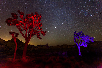 Joshua Trees painted with a speedlight & gel filters. Joshua Tree National Park