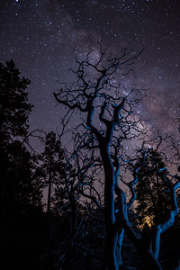 Manzanita tree & the Milkyway