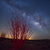 Ocotillo and the Milkyway, Anza Borrego State Park, Ca.