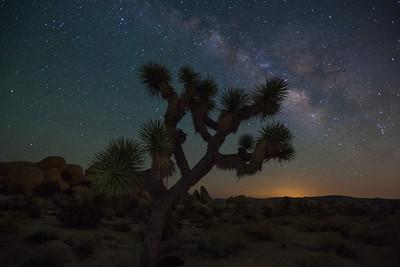 """Joshua Tree at Night"", Joshua Tree NationalPark"