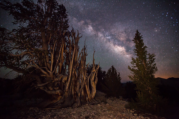A rocky path in the Ancient Bristlecone Pine Forest. White Mountains, Ca.
