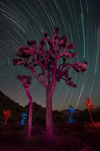 Light painted Joshua Trees with star trails