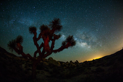 Joshua tree and the milkyway, Joshua Tree National Park