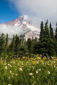Mount Rainier from Paradise