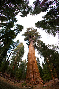 General Sherman, Sequoia National Park