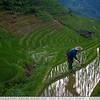 The Rice Farmers Reflection - Longi Rice Terraces, China