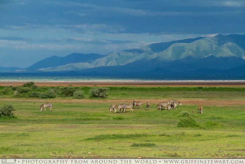 Zebra At Lake Manyara