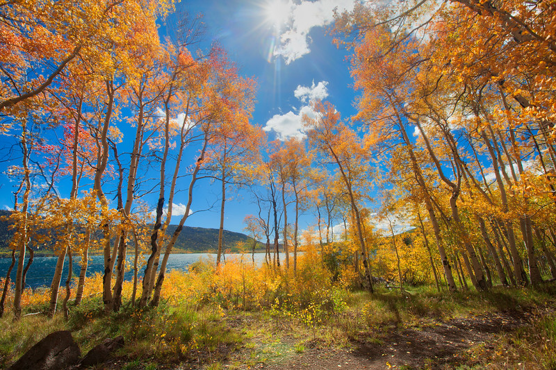 Aspen trees at Fish Lake.
