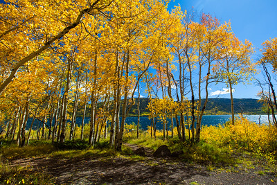 Aspen trees at Fish lake.