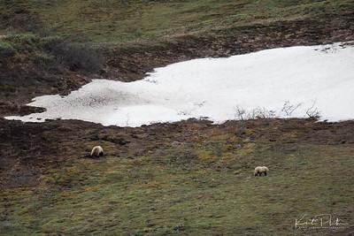 AlaskaLandscape-29