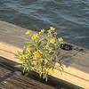 043003NOLA_weed