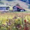 Appalachian Meadow