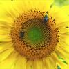 Bee's Eye View