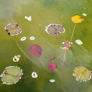 A Garden Pond~3437-1sq.